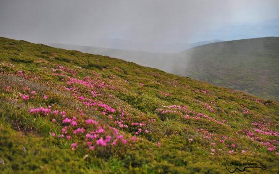Aniversare și cântec! – ziua1 – Vf Gropşoarele, munții Ciucaș