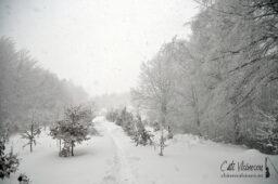 Baiului: Vf Clabucetul Taurului, Cabana Garbova si Susai (tura de iarna)