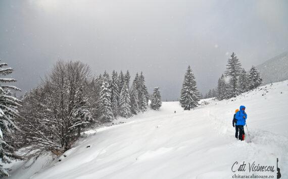 Piatra Craiului: plimbare lejera de iarna pana la cabana Curmatura
